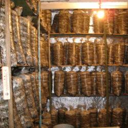 фото Особенности выращивания вешенки в гараже