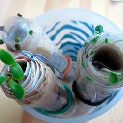 фотоВыращивание рассады в пеленках
