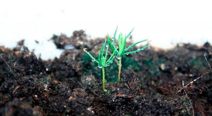 Семена в земле фото