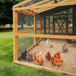 фото Как сделать загон для куриц своими руками?